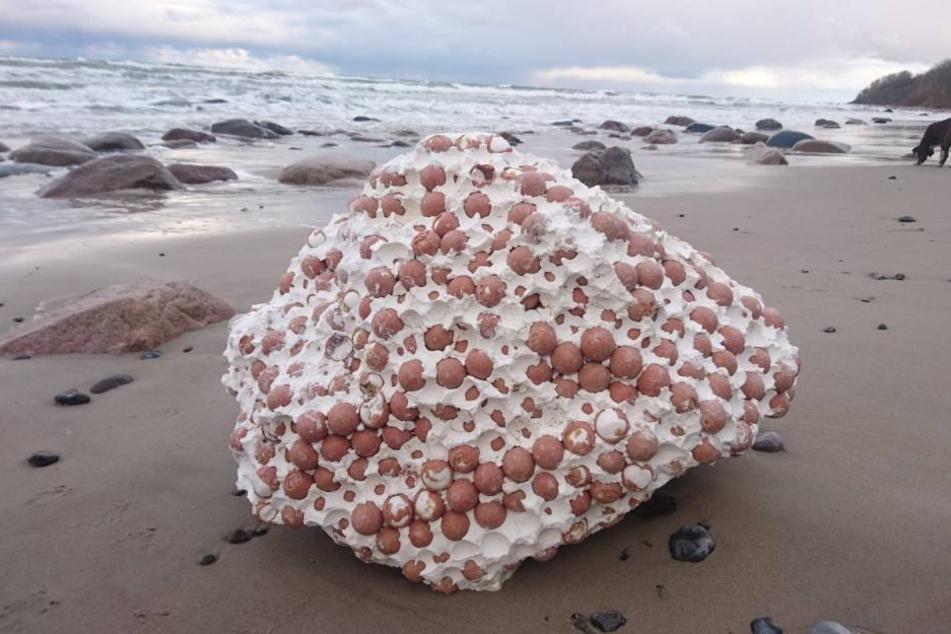Schüler fanden den Brocken am Strand.