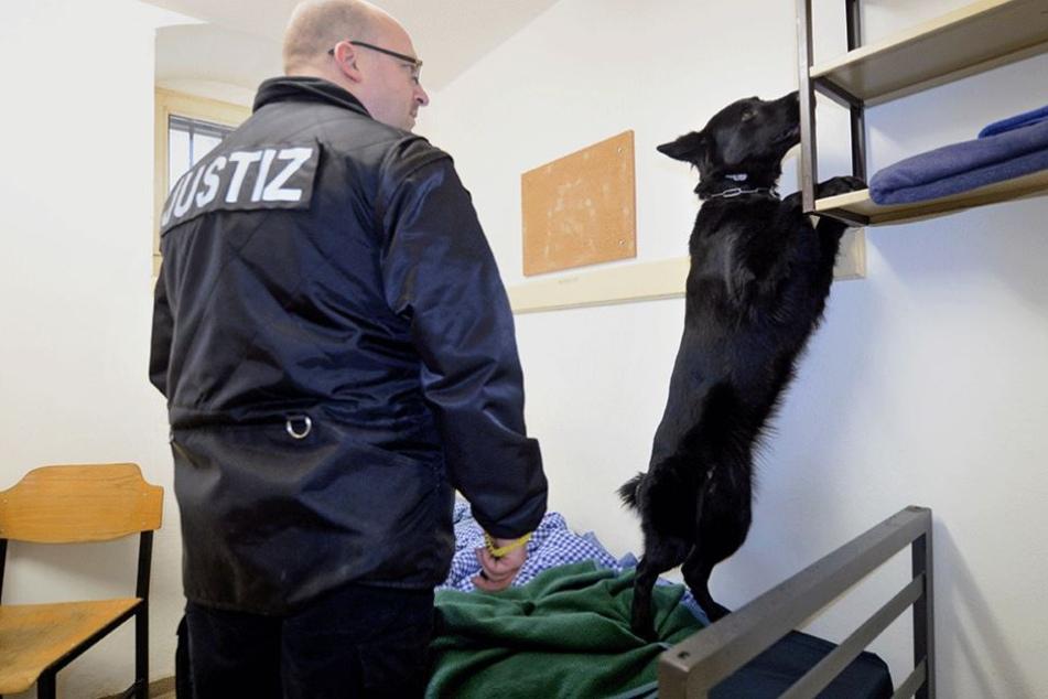 Auch Drogenhunde werden bei regelmäßigen Zellenkontrollen eingesetzt (Symbolbild).