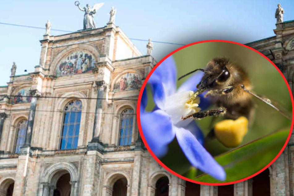 Artenschutz in Bayern: Jetzt wird's ernst
