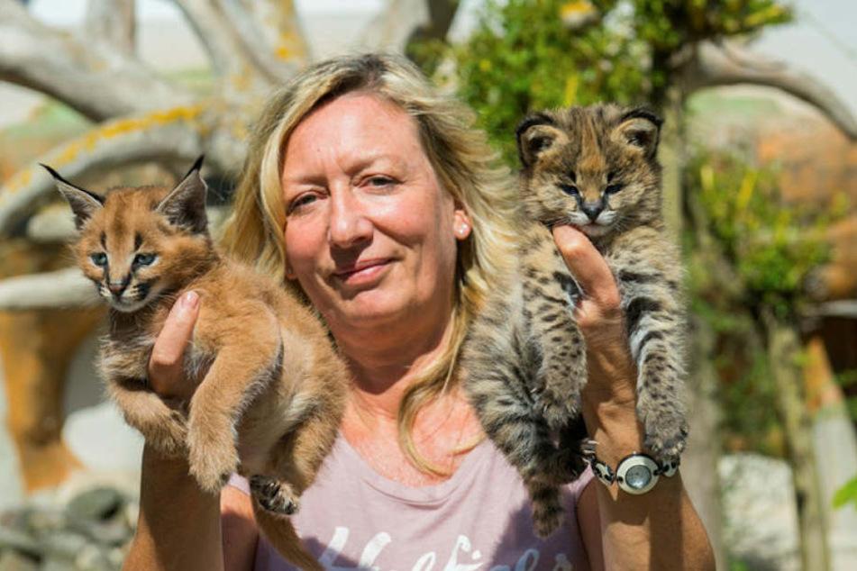 Zoochefin Bärbel Schroller (50) hat den wilden Nachwuchs voll im Griff: Karakal-Kater Cäsar (l.) und Serval-Mieze Sunny.