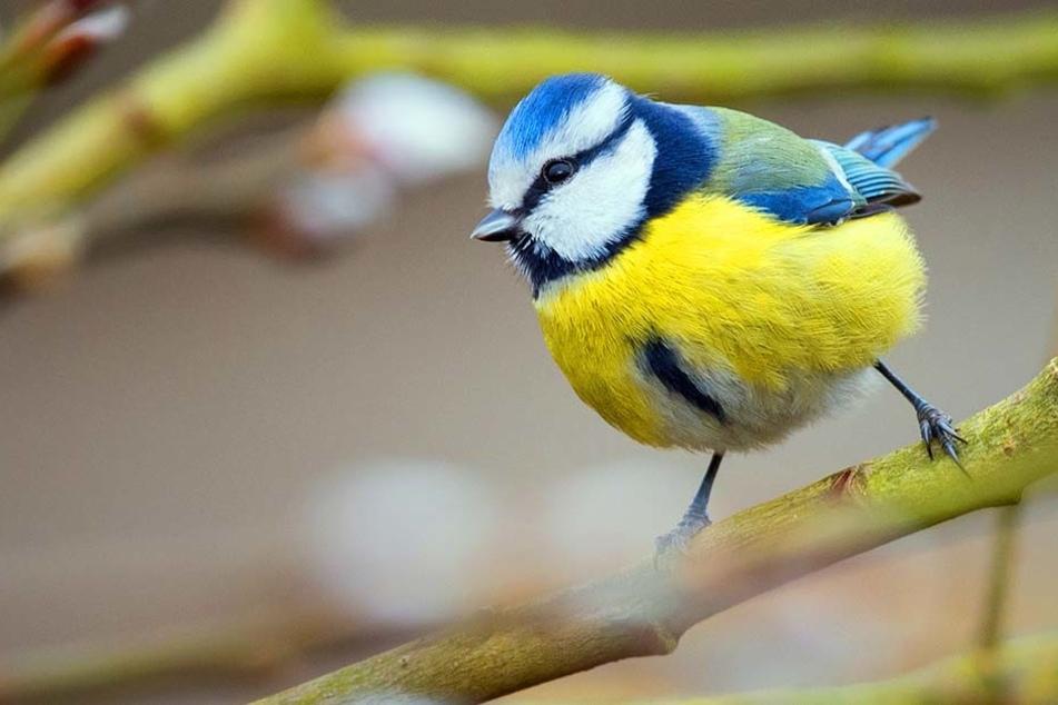 Immer mehr Singvögel sterben im Kreis Herford. Sind die Bauern schuld?