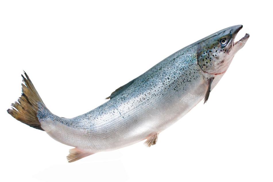 Der Traum der Angler: Die Rückkehr der Lachse!