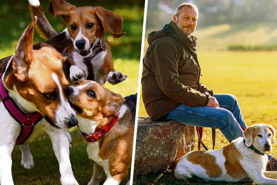 Dem Horror-Tod entkommen: Sachse rettet Laborhunde
