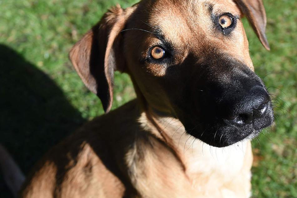 Heldenhaft: Hund rettet Herrchen das Leben