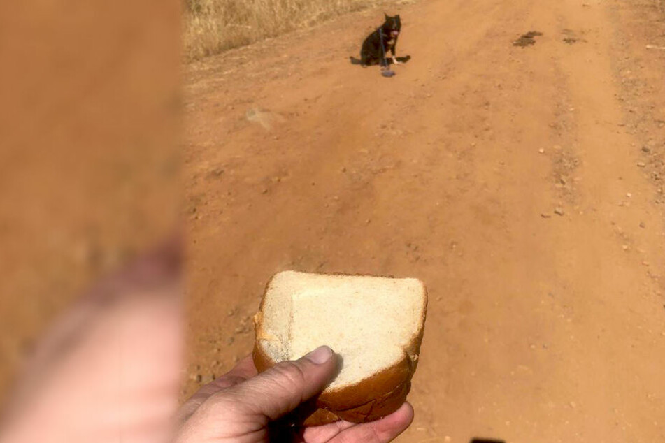 Mit einem Sandwich wurde der Vierbeiner angelockt, regte sich jedoch nicht.