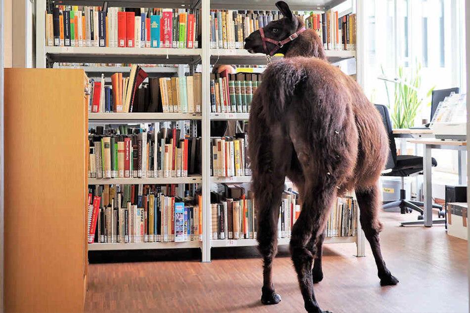 Zur Buchmesse geht es auch im Zoo Leipzig literarisch zu.