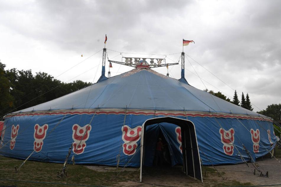 Die Kamele sind aus ihrem Gehege eines Zirkus in der Nähe entkommen. (Symbolbild)