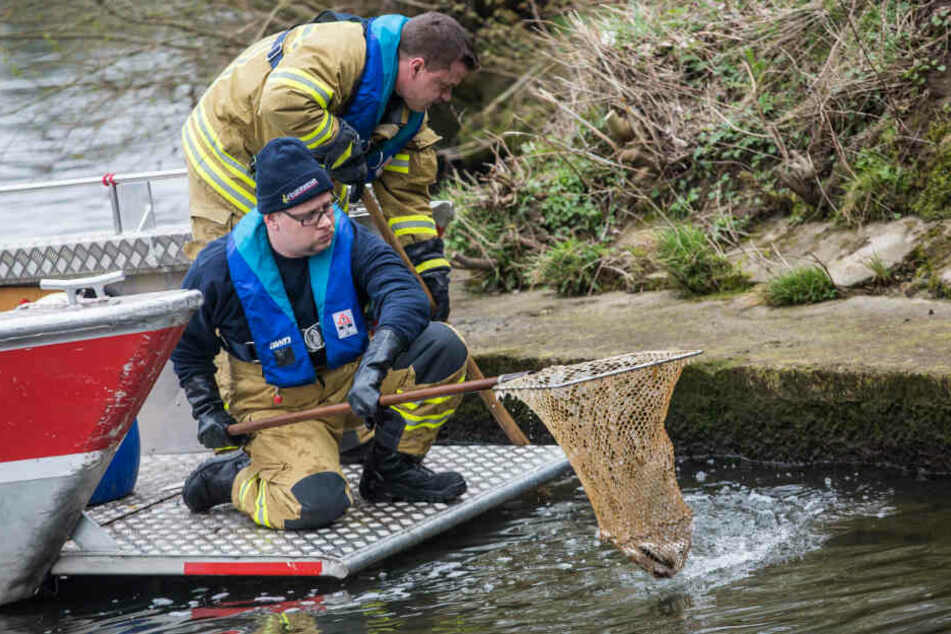 Feuerwehrleute holen mit einem Kescher vergangenen Freitag tote Fische aus der Schorzach.