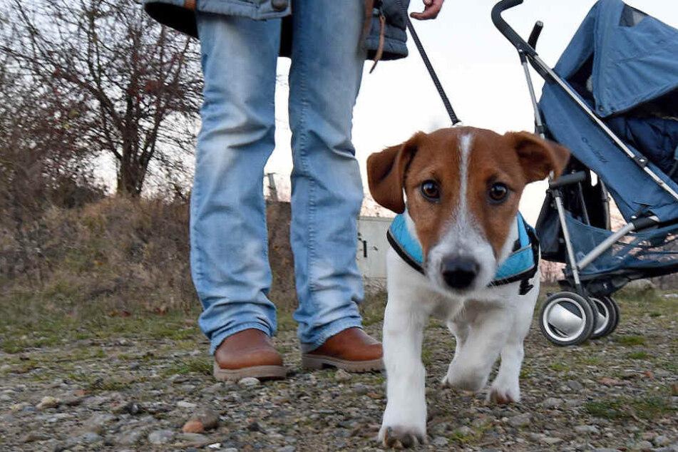 Im neuen Jahr müssen die Hunde an die Leine. (Symbolbild)