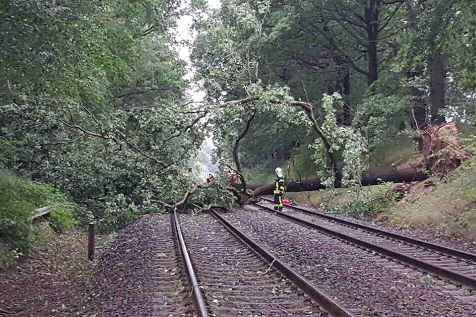 Das Unwetter vom Donnerstag entwurzelte Bäume, legte den Zugverkehr in Teilen Sachsens lahm.