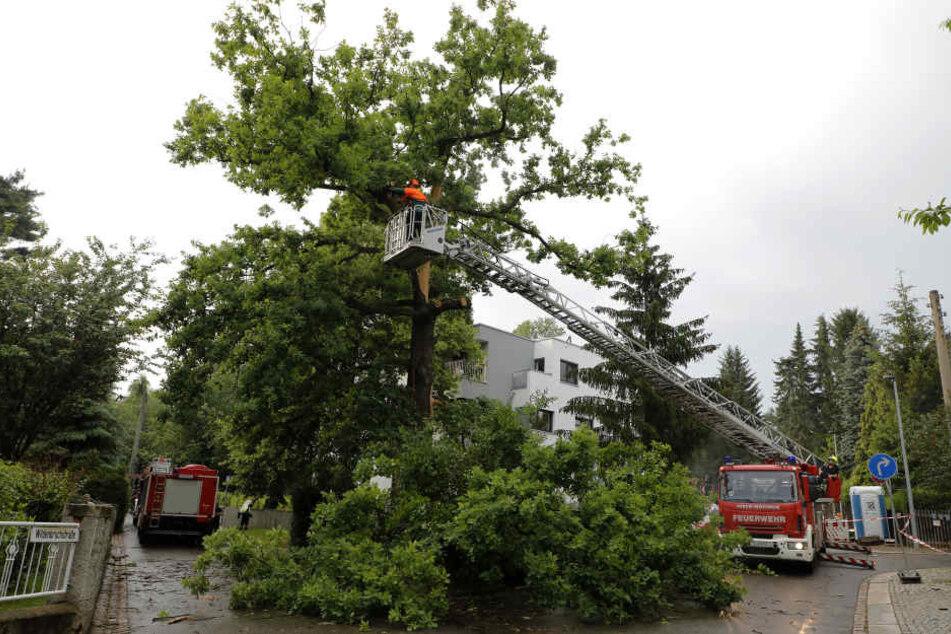 Auch in Chemnitz wütete am Donnerstag ein heftiges Gewitter: In der Wildenbruchstraße schlug ein Blitz in eine Eiche ein.
