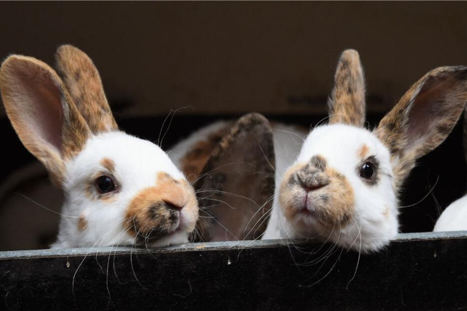 Kaninchen als Haustier: Auch sie brauchen artgerechte Haltung