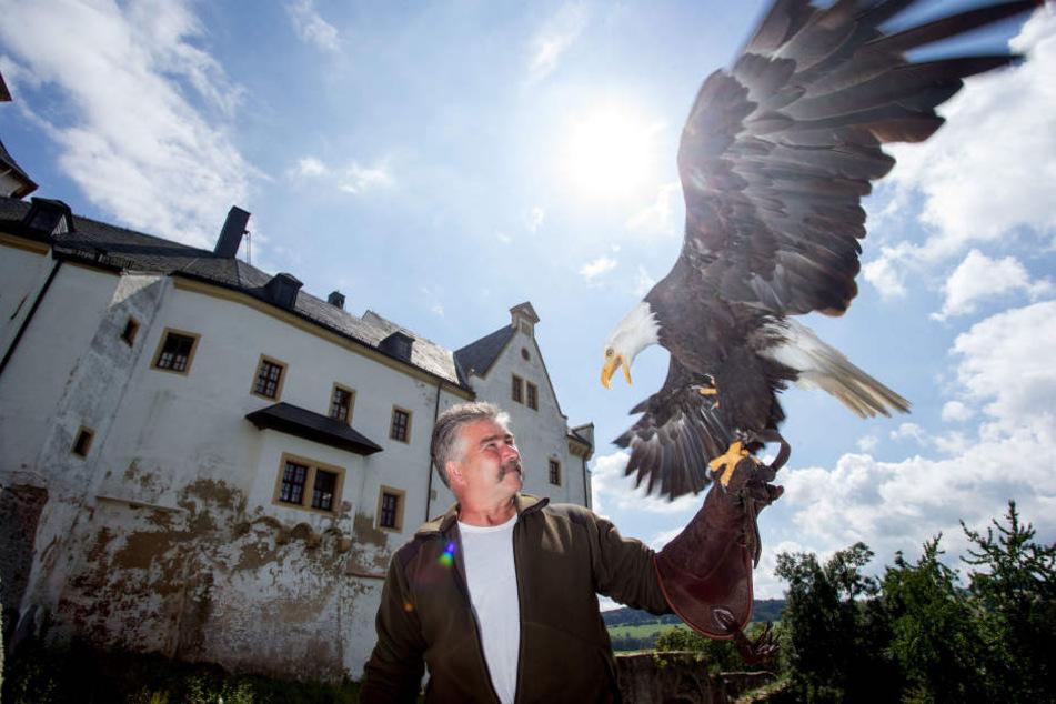 Michael Löbel (58) betreibt seit 1992 den Adler- und Jagdfalkenhof. Die Greifvogel-Zucht soll am Jagdschloss bleiben. Auf dem Foto ist er mit einem Weißkopfseeadler zu sehen.