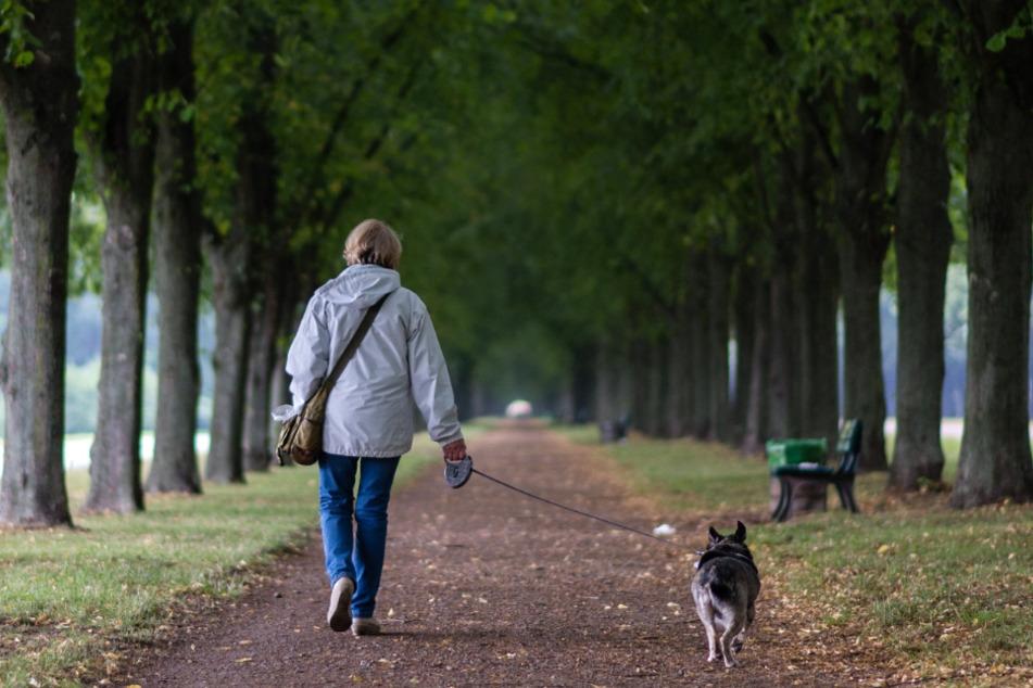 Fühlen sich Hunde im Wald sowie auf Wiesen und Feldwegen wohler? Landhunde scheinen durch mehr Kontakt und Aktivität weniger ängstlich zu sein.
