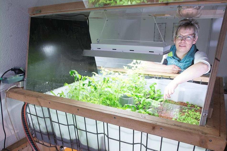 Antje Rausch (50) zeigt, wie es geht: Unten schwimmen die Fische, oben wächst das Gemüse.