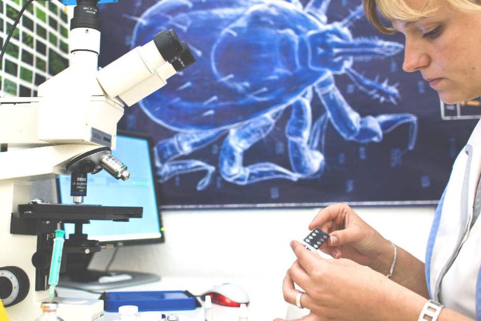 US-amerikanische Mediziner warnen vor dem gefährlichen Powassan-Fieber.