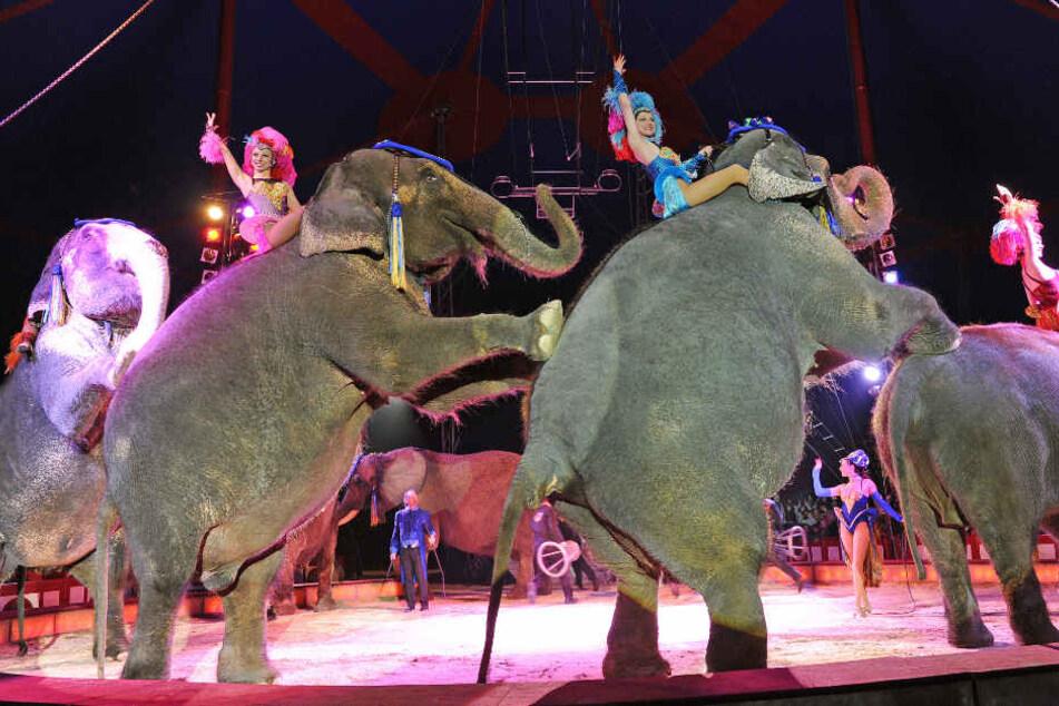 Auch sie gehören zum Programm vom Circus Krone: die Elefanten. (Archivbild)