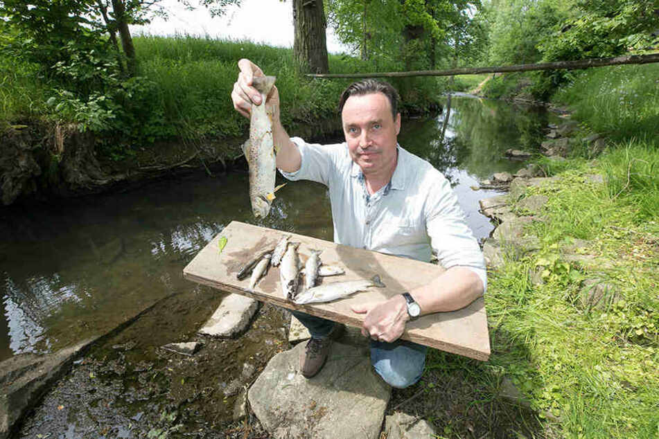 """Jagdpächter Lars Natusch (45) entdeckte in seinem Revier im """"Schwarzen  Schöps"""" diese toten Fische."""