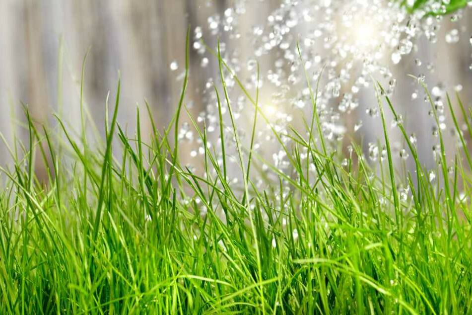 Regenwasser ist ideal zum Gießen im Garten. Es ist nicht zu kalt, enthält keinerlei Mineralien und beeinflusst den pH-Wert und Nährstoffgehalt des Bodens kaum.
