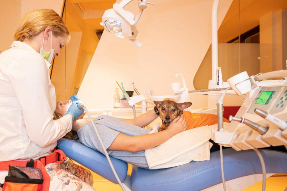 Peppi, Therapiehund, sitzt im Behandlungzimmer einer Zahnarztpraxis in Berlin-Charlottenburg auf dem Schoß von Linus Linderhaus, Patient, neben Birte Habedank, Kinder-und Jugendzahnärztin.