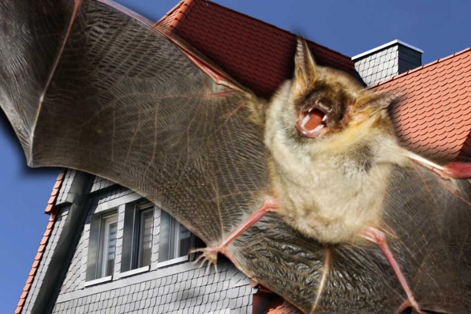 Dunkle Dächer sind für Fledermäuse oft tödlich. (Symbolbild)
