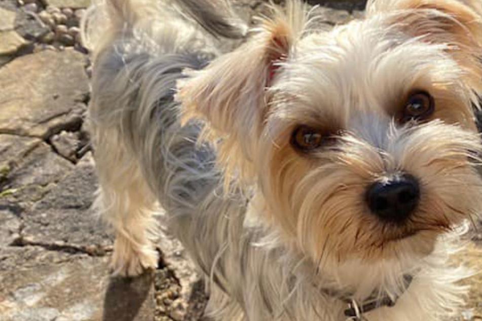 """""""Er hatte keine Chance!"""" Hund tötet Vierbeiner im Park, Frauchen am Boden zerstört"""