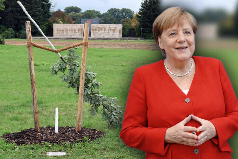 Angela Merkel kommt nach Zwickau!