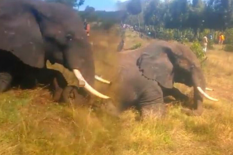 Dorfbewohner fallen über ein in Kenia am Boden liegendes Tier her (Symbolbild).