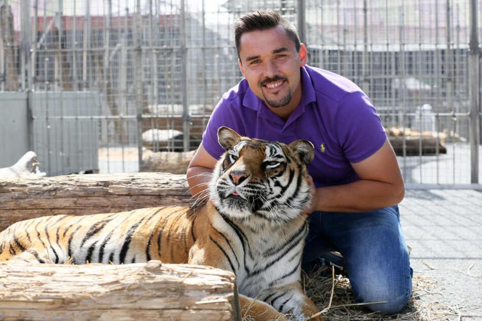 """Tom Dieck (33), Raubtierlehrer im """"Circus Probst"""", mit der Bengaltigerdame Dehli (17)."""