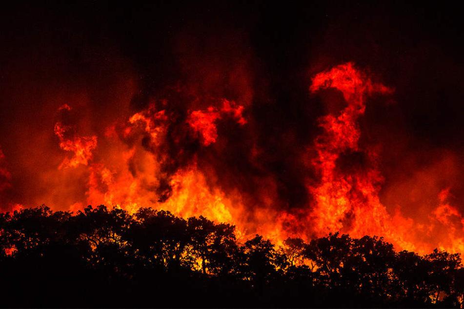 Nahe der Kleinstadt Monchique geriet ein Waldbrand außer Kontrolle.