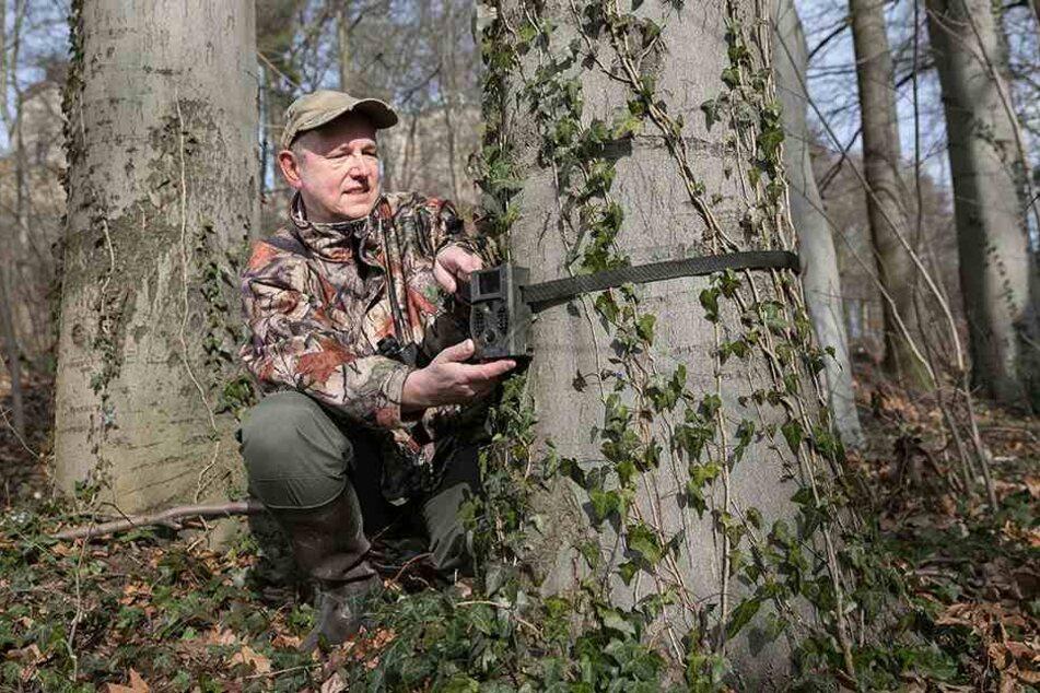 Sie drücken nicht nur selbst auf den Auslöseknopf, sondern nutzen auch Fotofallen im Wald, um die teils scheuen Wildtiere zu erwischen.