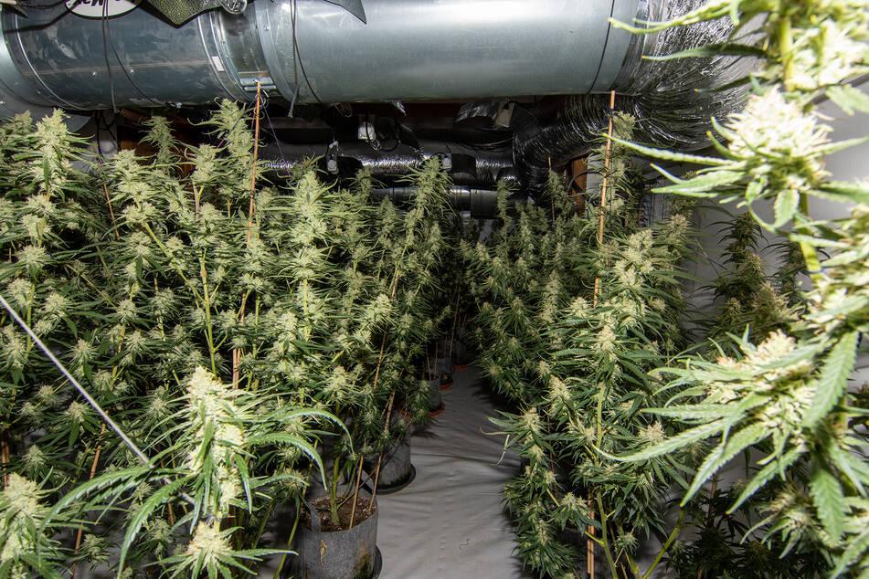 Drogen-Plantage in Wohnaus aufgeflogen: Verdächtiger ergreift die Flucht