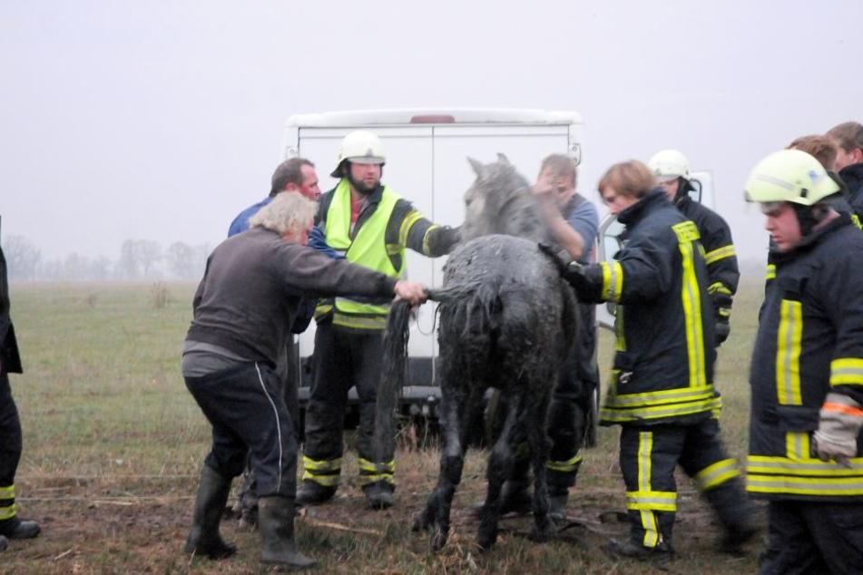 Entkräftet aber unverletzt stand die Stute nach der Rettungsaktion wieder auf eigenen Hufen.