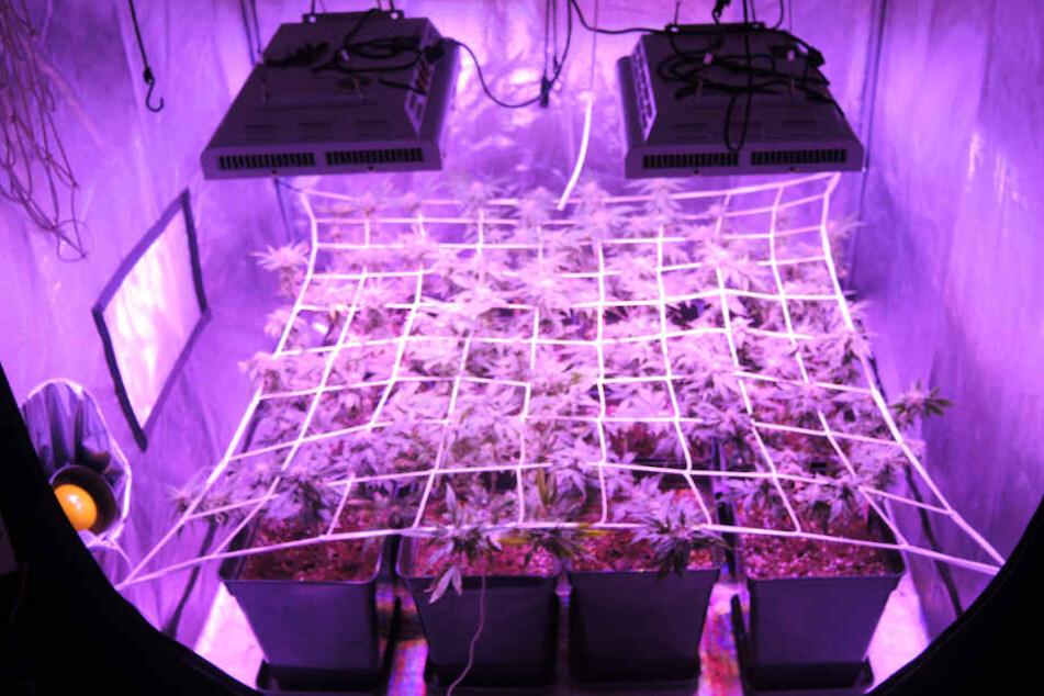 Zwei Indoor-Plantagen fanden die Polizisten in der Wohnung des 38-Jährigen.