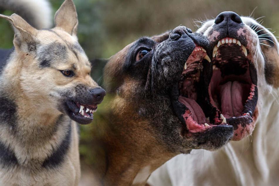 Frau wird auf Heimweg von mindestens acht Hunden angegriffen und zu Tode gebissen