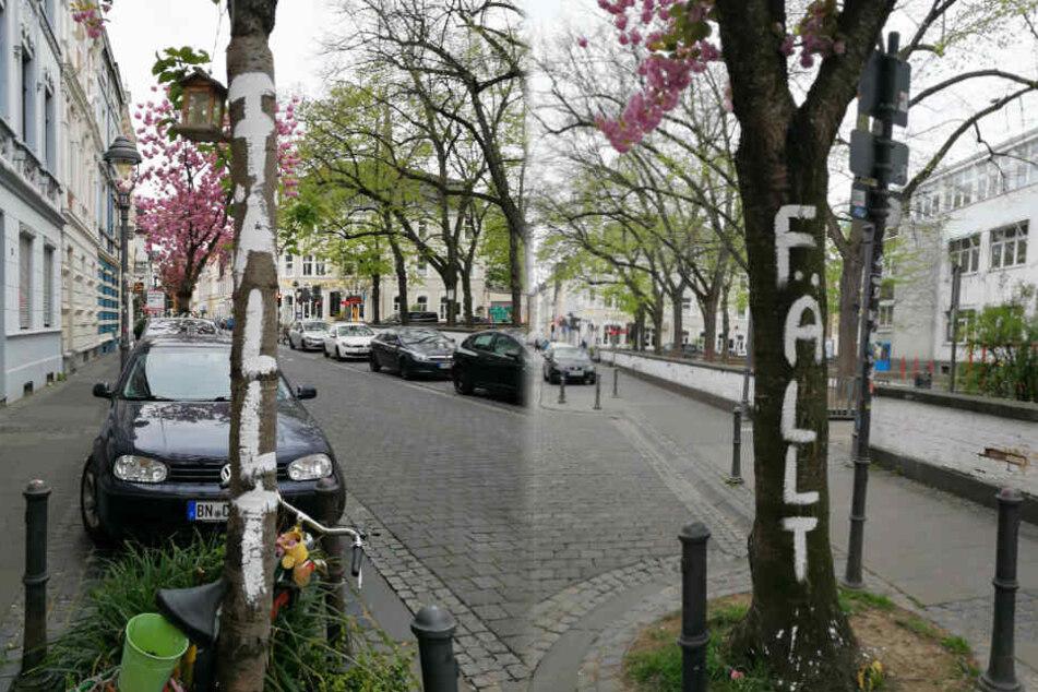 In der Heerstraße wurden die Bäume mit ihrer rosa Pracht mit weißer Farbe bemalt.