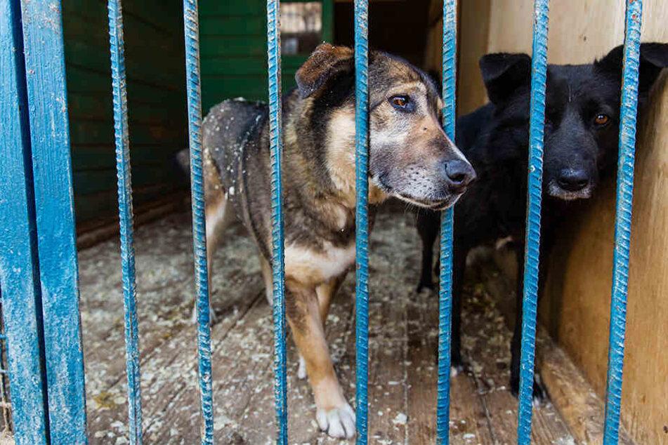 Sechs Hunde wurden eingefangen (Symbolbild).