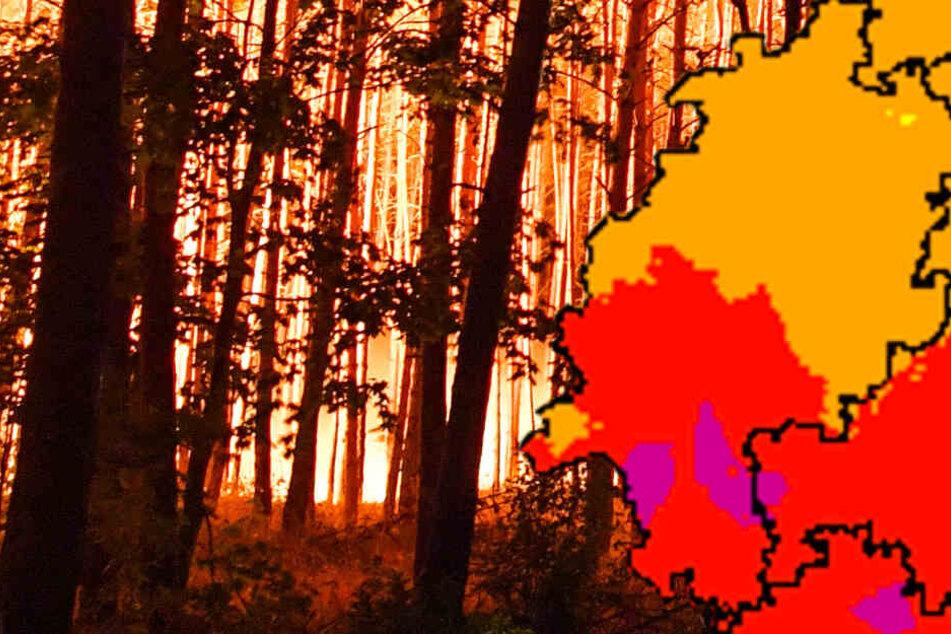 Achtung: Hohe bis sehr hohe Waldbrandgefahr in Frankfurt und Rhein-Main