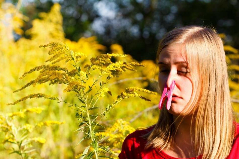 Die Kombination von Gewittern und einer hohen Pollenzahl kann sich für immer mehr Menschen als sehr schädlich und sogar tödlich erweisen.