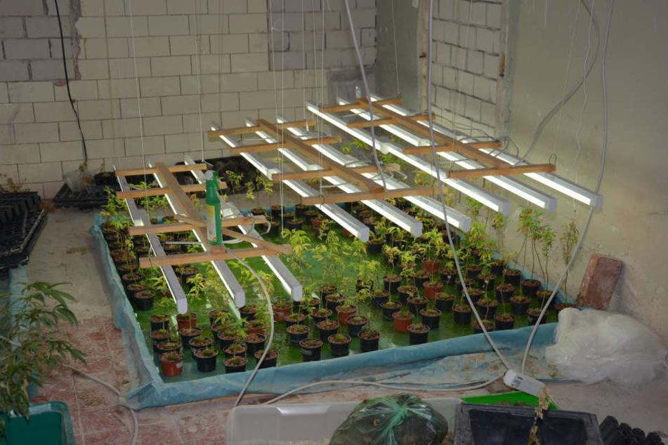 Im Wohnhaus verteilt wurden insgesamt 320 Cannabispflanzen, 170 Stecklinge, drei Mutterpflanzen sowie fünf Kilogramm Blüten- und Pflanzenreste sichergestellt.