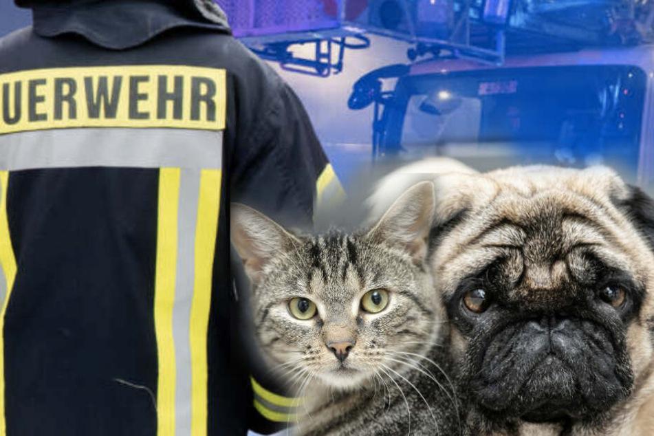 Hund und Katze aus brennender Wohnung gerettet