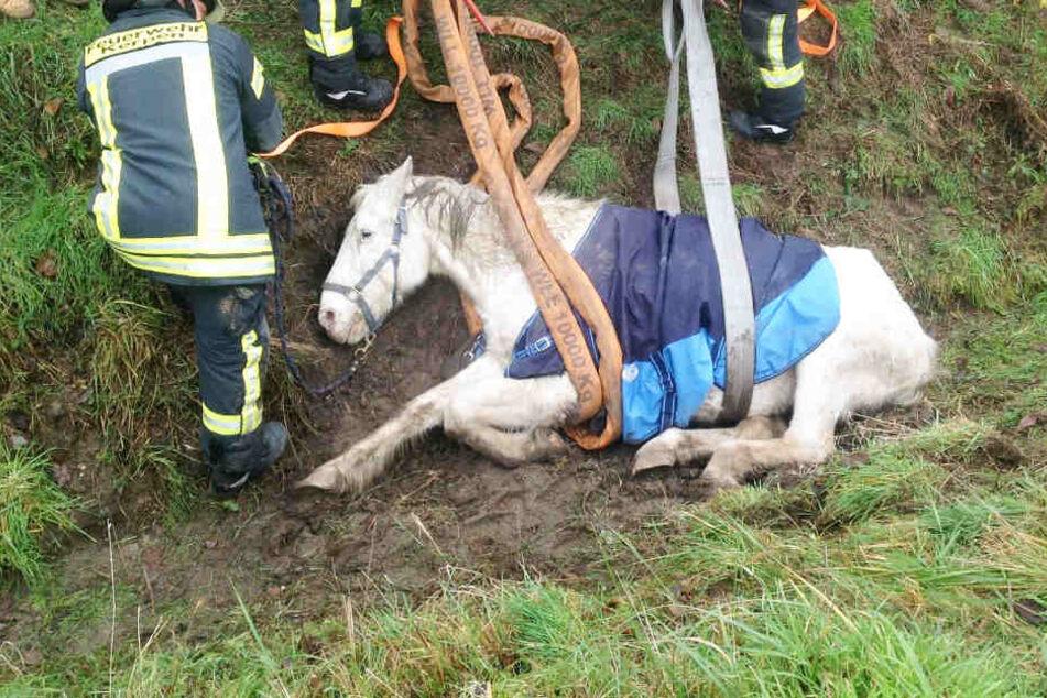 Rettung in der Not: Blindes Pferd muss aus Graben befreit werden!