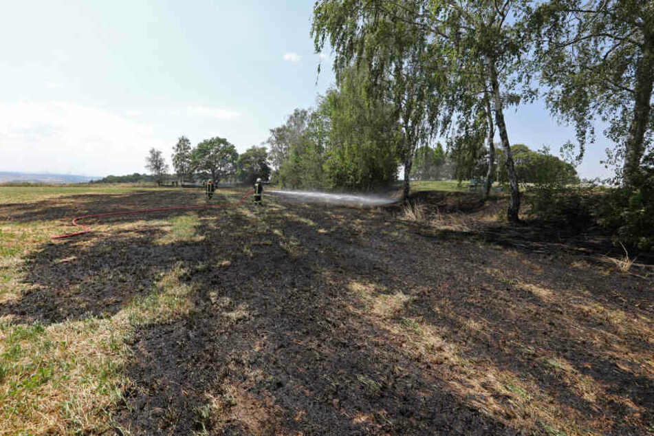 Eine Fläche von etwa 1000 Quadratmetern brannte ab.