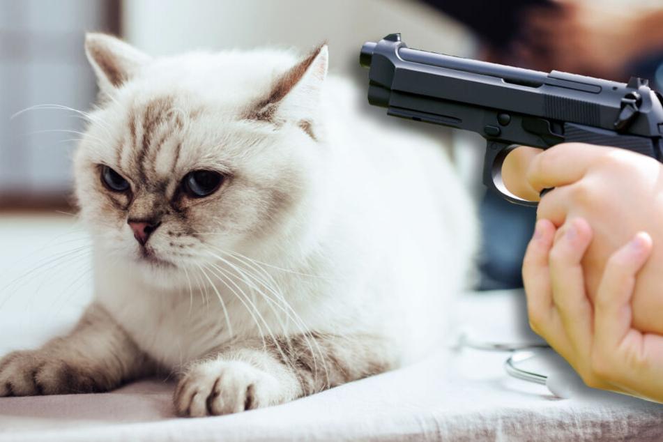 Tierhasser schießt auf Katze, doch nicht das erste Mal