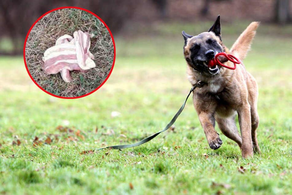 Immer wieder werden gerade Hunde das Opfer von Giftködern (Symbolbild).