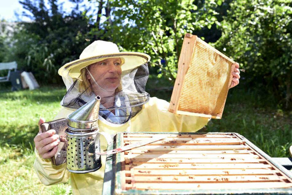 Die Chemnitzer Bienensachverständige Heike Janthur (49) kennt sich auch mit dem Imkern bestens aus.