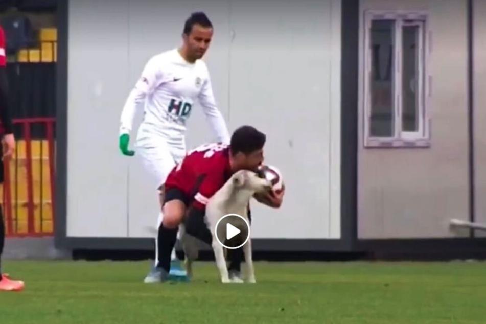 Karagümrük-Kapitän Zeki Yildirim griff sich den Hund, der sich problemlos vom Feld tragen ließ.