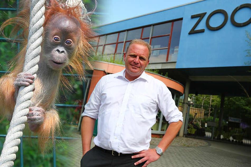 Ärger um das Orang-Utan-Haus: Tierschützer verklagen Dresdner Zoo
