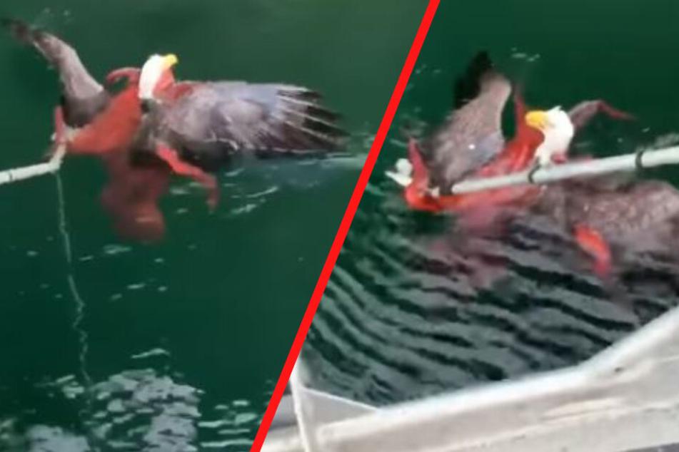Kanadische Fischer retteten Adler aus den Armen eines Kraken