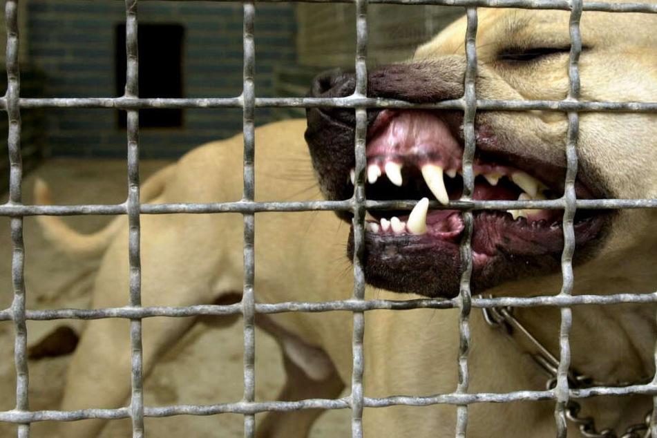 Tiefe Bisswunden! Hund attackiert seine eigene Familie, Söhne und Mutter verletzt